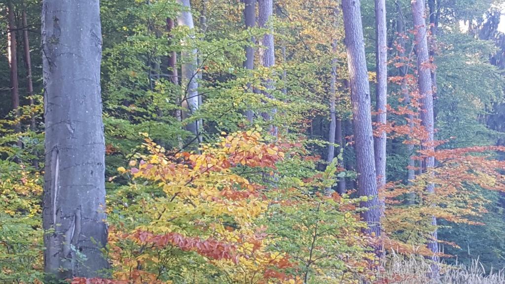 Las jesienny Delfa Gryfino